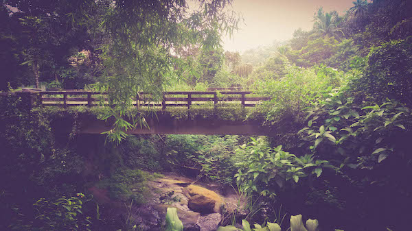 Grow-blog-roheline raamatupidamine